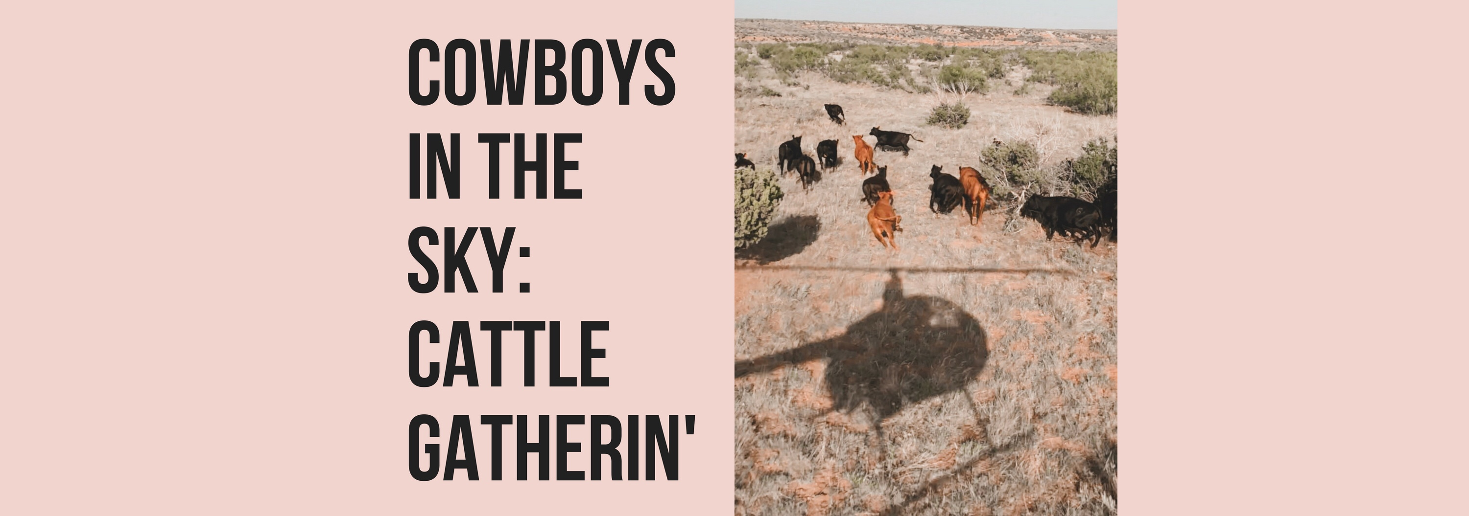 Cowboys In The Sky: Cattle Gatherin'